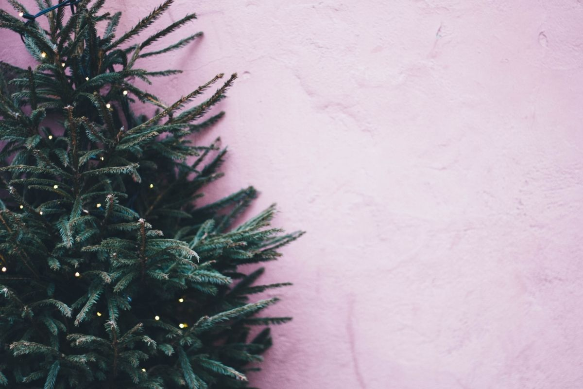 Pink background with green Christmas tress
